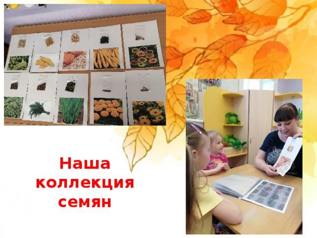 Наша коллекция семян