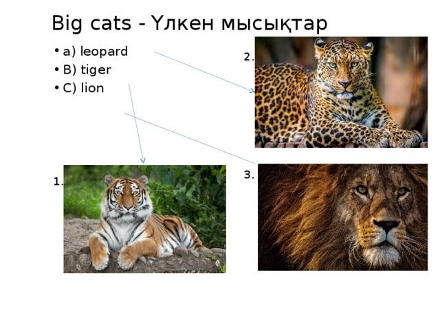 Big cats - Yлкен мысықтар a) leopard B) tiger C) lion 2. 3. 1.