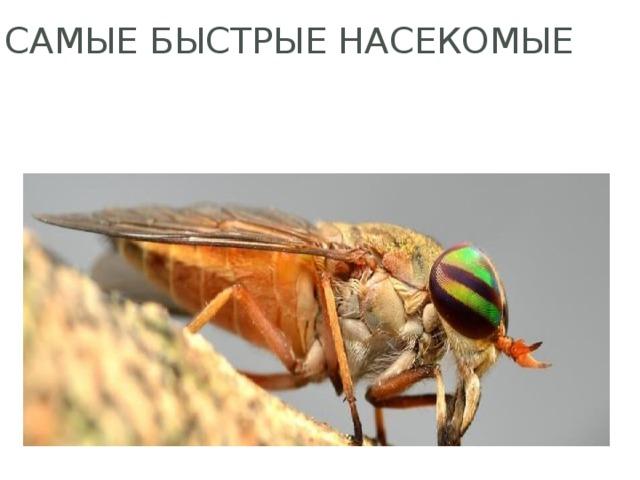 Самые быстрые насекомые