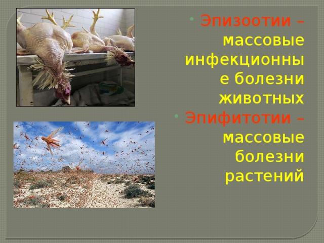 Эпизоотии – массовые инфекционные болезни животных Эпифитотии – массовые болезни растений