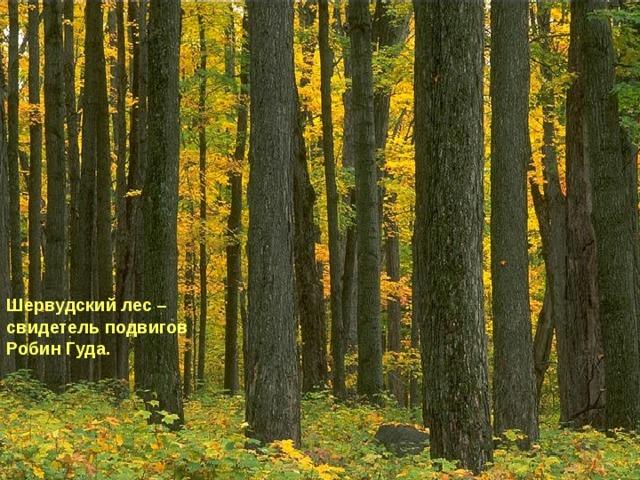 Шервудский лес – свидетель подвигов Робин Гуда.