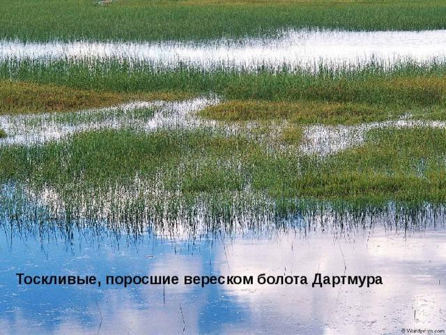 Тоскливые, поросшие вереском болота Дартмура