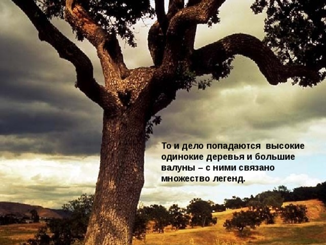То и дело попадаются высокие одинокие деревья и большие валуны – с ними связано множество легенд.