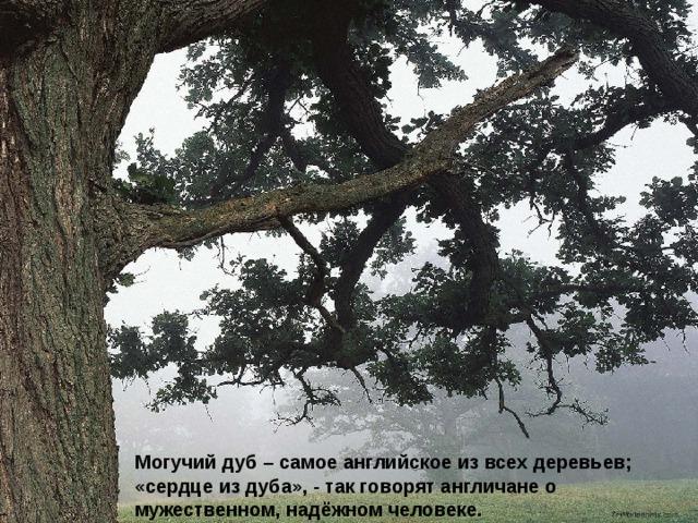 Могучий дуб – самое английское из всех деревьев; «сердце из дуба», - так говорят англичане о мужественном, надёжном человеке.