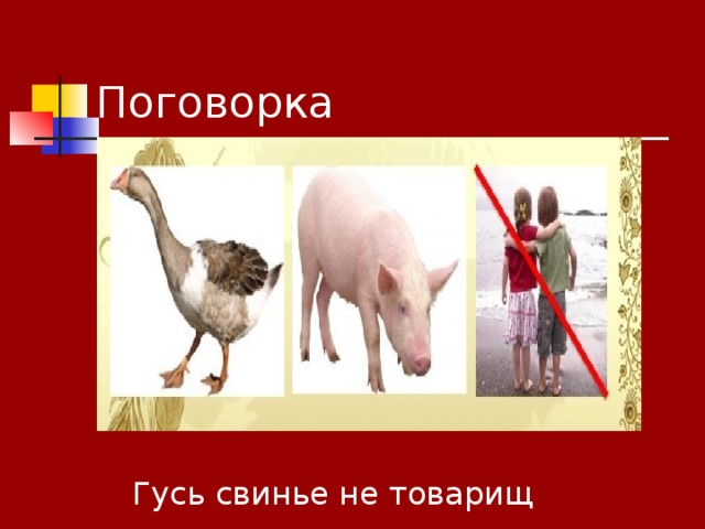 Поговорка Гусь свинье не товарищ
