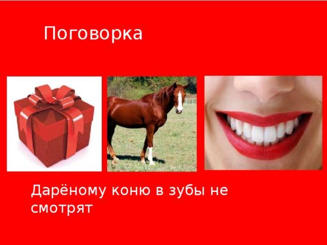 Поговорка Дарёному коню в зубы не смотрят