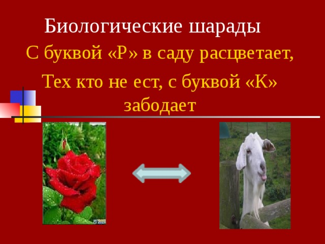 Биологические шарады С буквой «Р» в саду расцветает, Тех кто не ест, с буквой «К» забодает