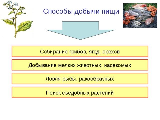 Способы добычи пищи Собирание грибов, ягод, орехов Добывание мелких животных, насекомых Ловля рыбы, ракообразных Поиск съедобных растений