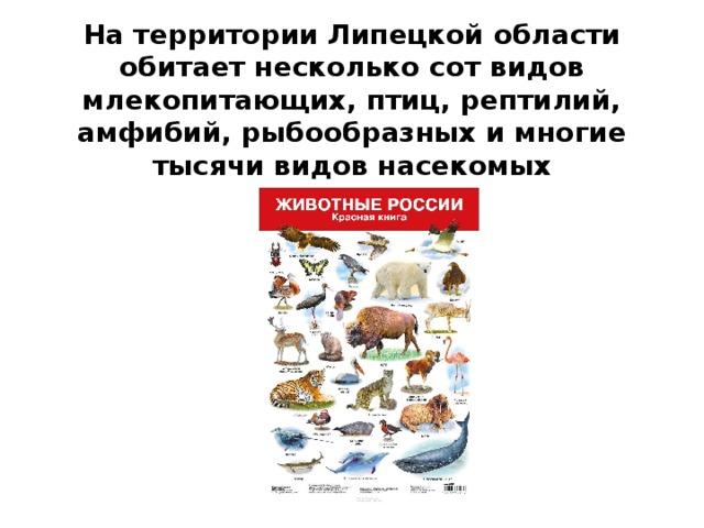 На территории Липецкой области обитает несколько сот видов млекопитающих, птиц, рептилий, амфибий, рыбообразных и многие тысячи видов насекомых