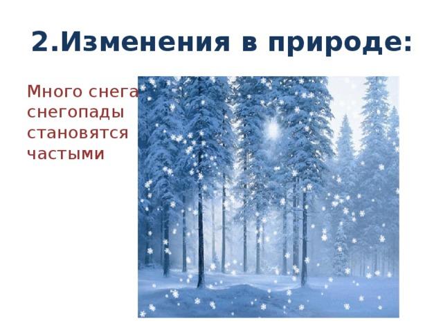 2.Изменения в природе: Много снега, снегопады становятся частыми