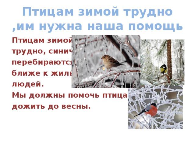 Птицам зимой трудно ,им нужна наша помощь Птицам зимой трудно, синички перебираются ближе к жилью людей. Мы должны помочь птицам дожить до весны.