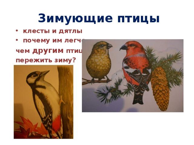 Зимующие птицы клесты и дятлы почему им легче, чем другим птицам пережить зиму?