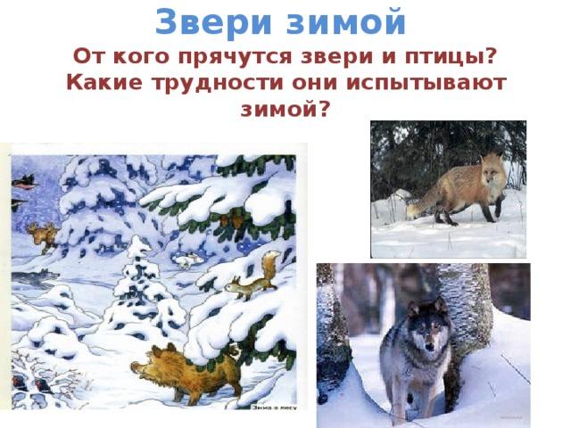 Звери зимой   От кого прячутся звери и птицы?  Какие трудности они испытывают зимой?