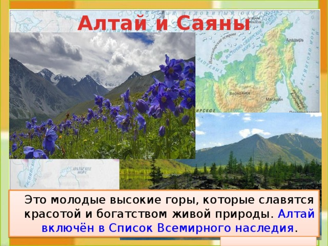 Алтай и Саяны  Это молодые высокие горы, которые славятся красотой и богатством живой природы. Алтай включён в Список Всемирного наследия .