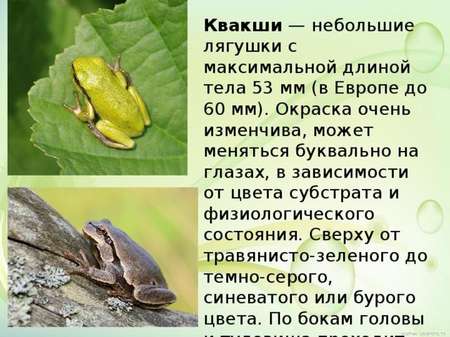 Квакши — небольшие лягушки с максимальной длиной тела 53 мм (в Европе до 60 мм). Окраска очень изменчива, может меняться буквально на глазах, в зависимости от цвета субстрата и физиологического состояния. Сверху от травянисто-зеленого до темно-серого, синеватого или бурого цвета. По бокам головы и туловища проходит темная с белой каемкой сверху полоса