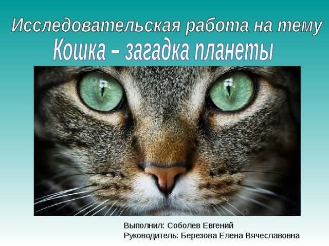 Выполнил: Соболев Евгений Руководитель: Березова Елена Вячеславовна