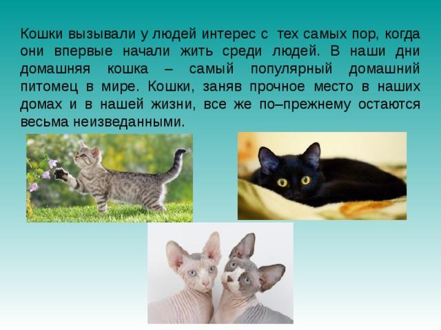 Кошки вызывали у людей интерес с тех самых пор, когда они впервые начали жить среди людей. В наши дни домашняя кошка – самый популярный домашний питомец в мире. Кошки, заняв прочное место в наших домах и в нашей жизни, все же по–прежнему остаются весьма неизведанными.