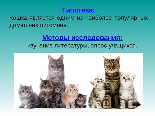 Гипотеза: Кошка является одним из наиболее популярных домашних питомцев . Методы исследования:  изучение литературы, опрос учащихся.