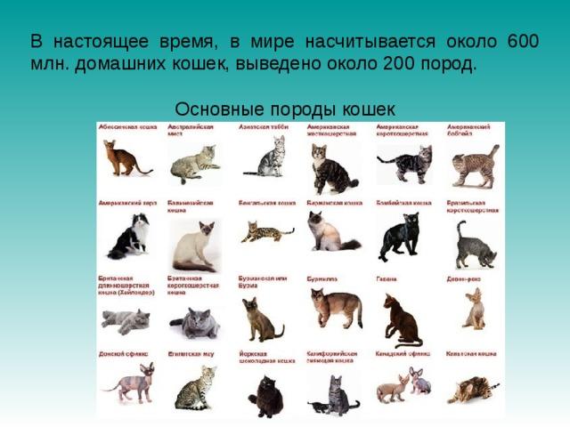 В настоящее время, в мире насчитывается около 600 млн. домашних кошек, выведено около 200 пород. Основные породы кошек