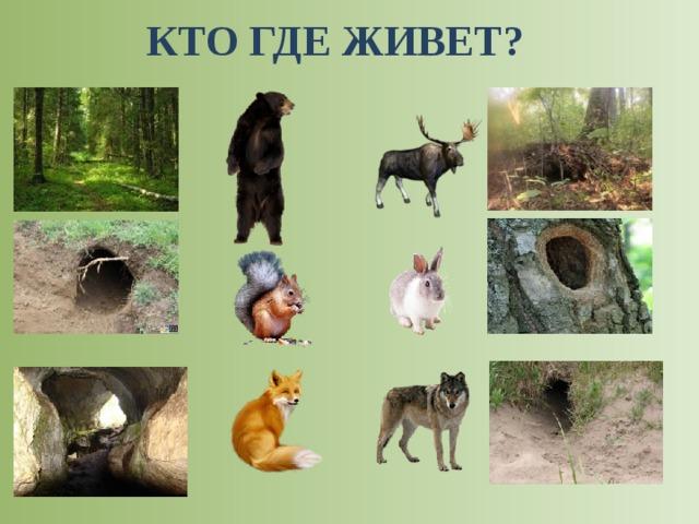 Жилище диких животных в картинках