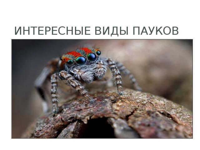 Интересные виды пауков