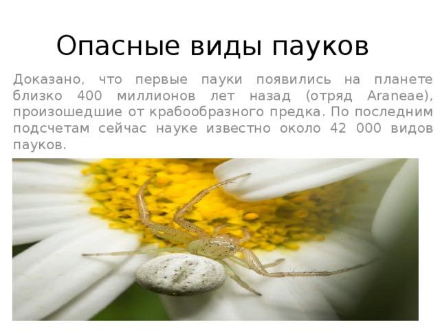 Опасные виды пауков Доказано, что первые пауки появились на планете близко 400 миллионов лет назад (отряд Araneae), произошедшие от крабообразного предка. По последним подсчетам сейчас науке известно около 42 000 видов пауков.
