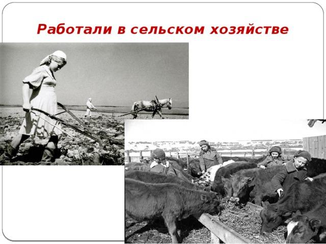 Работали в сельском хозяйстве