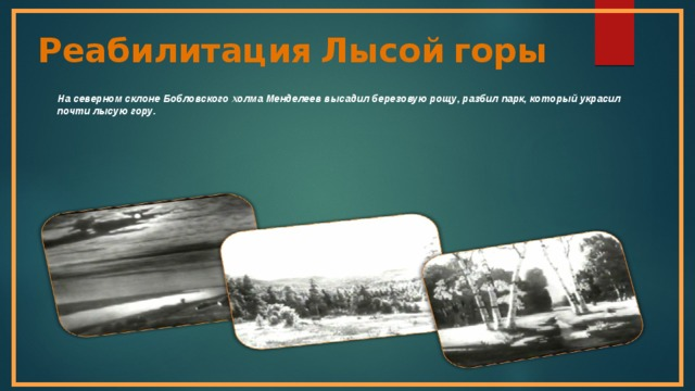 Реабилитация  Лысой  горы  На северном склоне Бобловского холма Менделеев высадил березовую рощу, разбил парк, который украсил почти лысую гору.