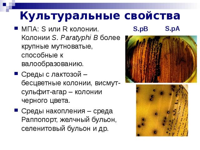 Культуральные свойства S.pA МПА: S или R колонии. Колонии S . Paratyphi  В более крупные мутноватые, способные к валообразованию. Среды с лактозой – бесцветные колонии, висмут-сульфит-агар – колонии черного цвета. Среды накопления – среда Раппопорт, желчный бульон, селенитовый бульон и др. S.pB