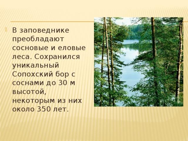 В заповеднике преобладают сосновые и еловые леса. Сохранился уникальный Сопохский бор с соснами до 30 м высотой, некоторым из них около 350 лет.