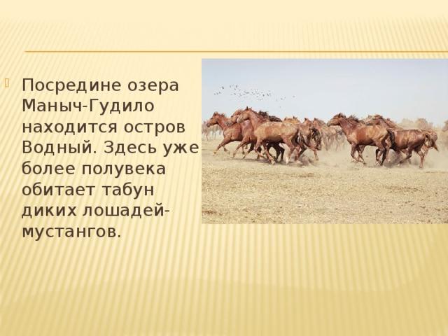 Посредине озера Маныч-Гудило находится остров Водный. Здесь уже более полувека обитает табун диких лошадей-мустангов.