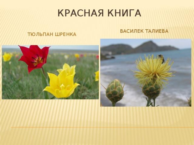 Красная книга Василек талиева Тюльпан шренка