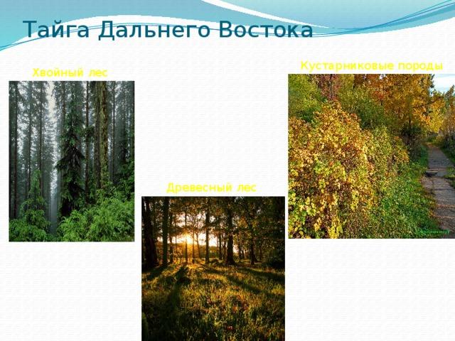 Тайга Дальнего Востока Кустарниковые породы Хвойный лес Мхи Древесный лес