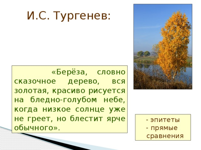 И.С. Тургенев:  «Берёза, словно сказочное дерево, вся золотая, красиво рисуется на бледно-голубом небе, когда низкое солнце уже не греет, но блестит ярче обычного». - эпитеты  - прямые  сравнения