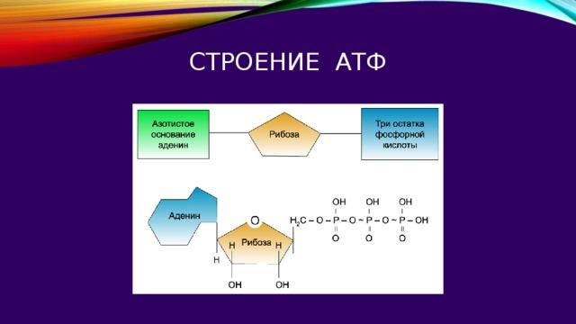 Строение атФ