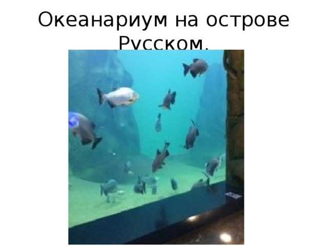 Океанариум на острове Русском.