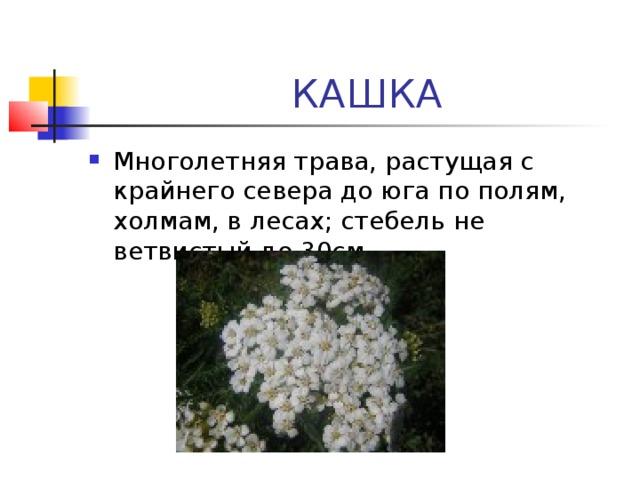 КАШКА