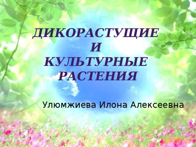 Дикорастущие и культурные растения Улюмжиева Илона Алексеевна
