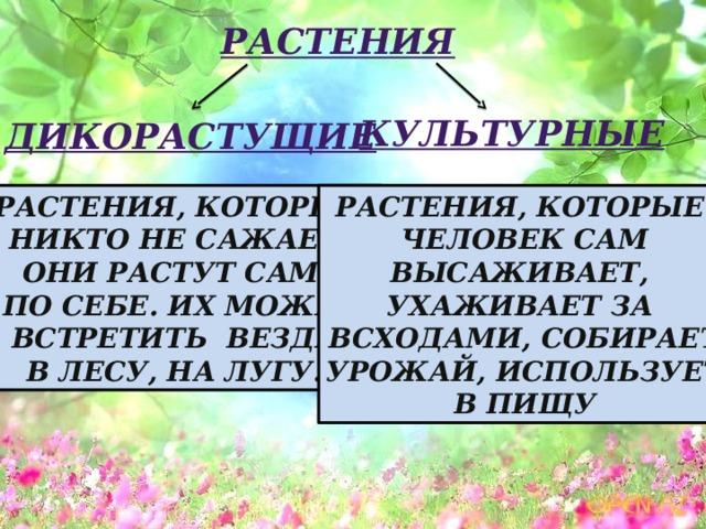 Растения культурные дикорастущие Растения, которые Растения, которые человек сам никто не сажает, они растут сами высаживает, ухаживает  за  по себе. Их можно всходами, собирает встретить везде: в лесу, на лугу... урожай, использует в пищу