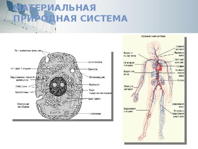Материальная  природная система