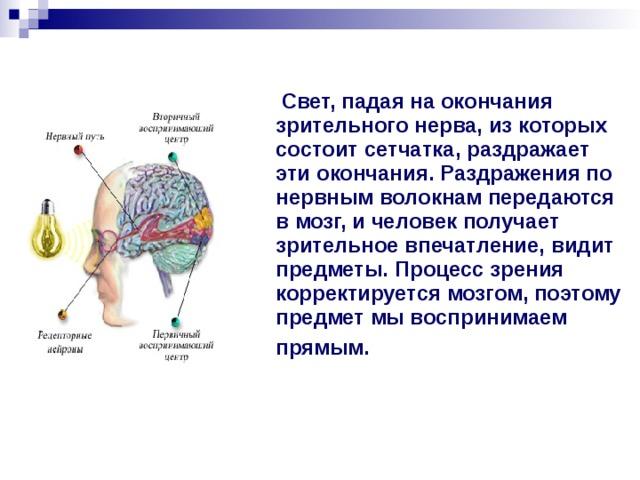 Свет, падая на окончания зрительного нерва, из которых состоит сетчатка, раздражает эти окончания. Раздражения по нервным волокнам передаются в мозг, и человек получает зрительное впечатление, видит предметы. Процесс зрения корректируется мозгом, поэтому предмет мы воспринимаем прямым.