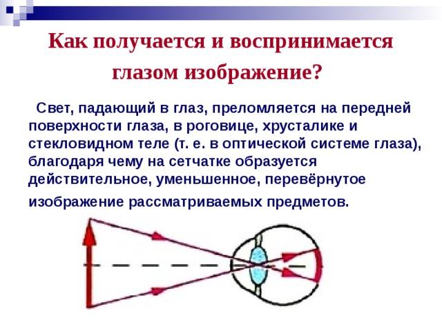 Как получается и воспринимается глазом изображение?  Свет, падающий в глаз, преломляется на передней поверхности глаза, в роговице, хрусталике и стекловидном теле (т. е. в оптической системе глаза), благодаря чему на сетчатке образуется действительное, уменьшенное, перевёрнутое изображение рассматриваемых предметов.