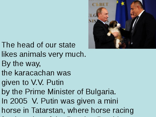 The head of our state  likes animals very much.  By the way,  the karacachan was  given to V.V. Putin  by the Prime Minister of Bulgaria.  In 2005 V. Putin was given a mini horse in Tatarstan, where horse racing for the prize of the Russian President was held.
