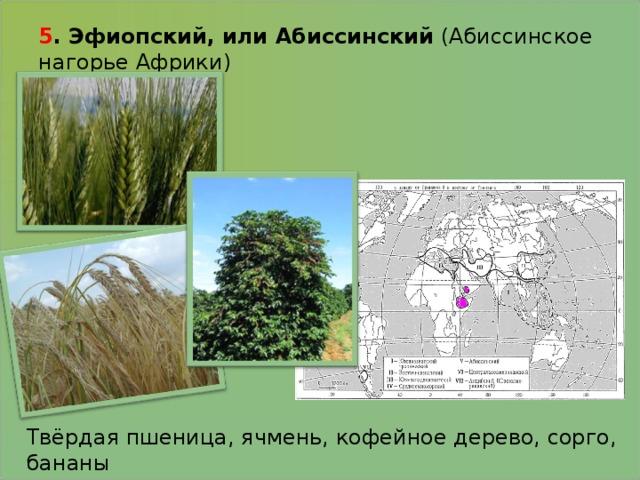 5 . Эфиопский, или Абиссинский (Абиссинское нагорье Африки)   Твёрдая пшеница, ячмень, кофейное дерево, сорго, бананы