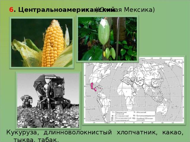 6 . Центральноамериканский   (Южная Мексика) Кукуруза, длинноволокнистый хлопчатник, какао, тыква, табак.