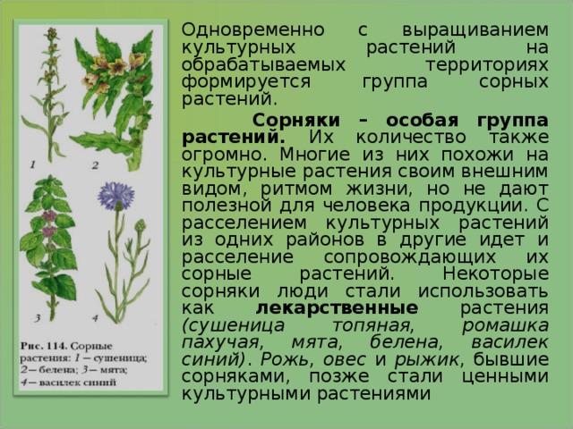 Одновременно с выращиванием культурных растений на обрабатываемых территориях формируется группа сорных растений.