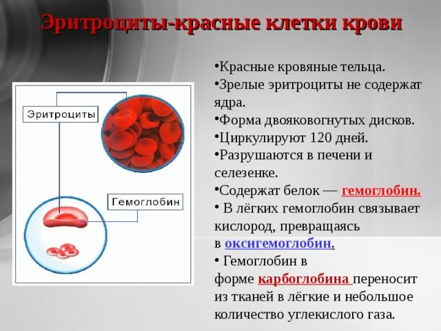 Эритроциты-красные клетки крови