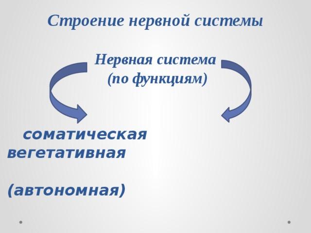 Строение нервной системы Нервная система (по функциям)  соматическая вегетативная  (автономная)