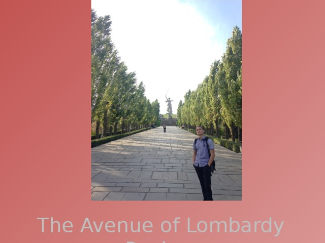 The Avenue of Lombardy Poplars