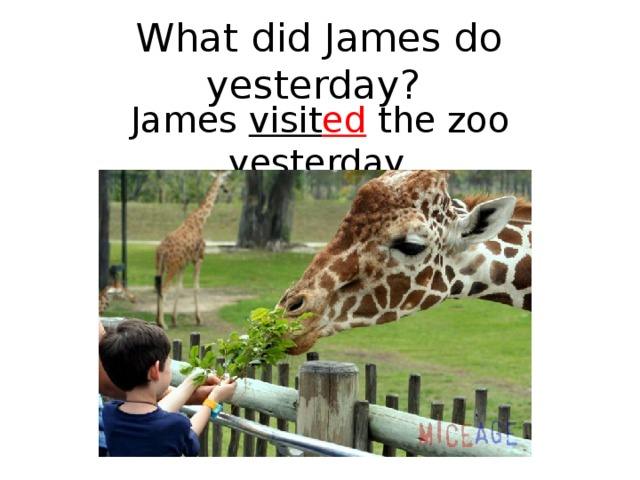 What did James do yesterday? James visit ed the zoo yesterday.